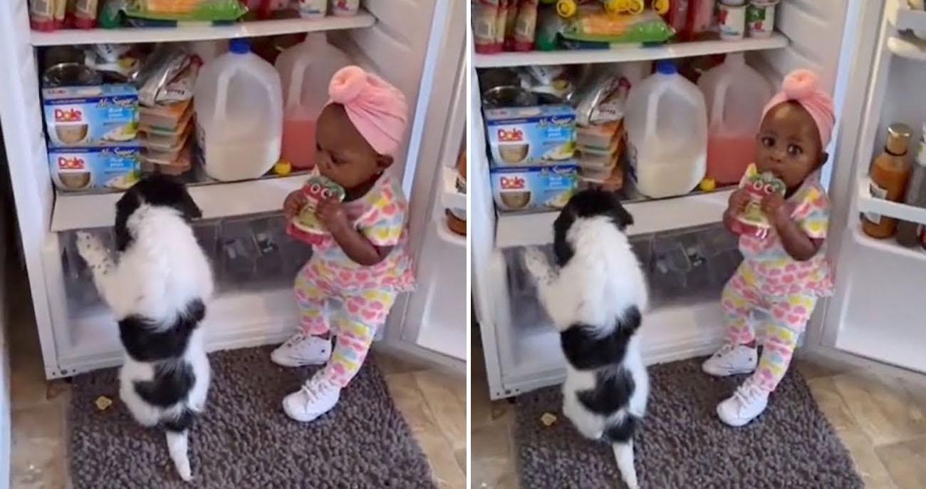 Pai flagra bebê e cachorrinho assaltando a geladeira em vídeo hilário e fofo
