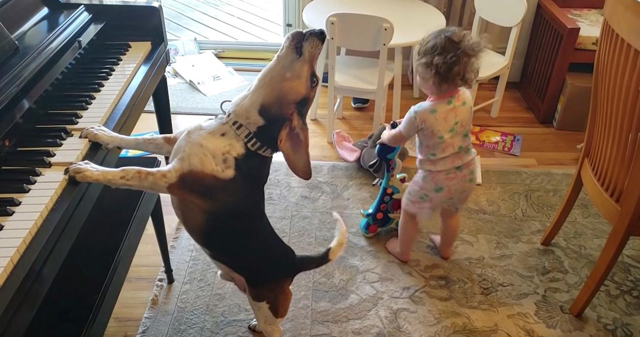 Cachorro toca piano e canta enquanto bebê toca guitarra e dança