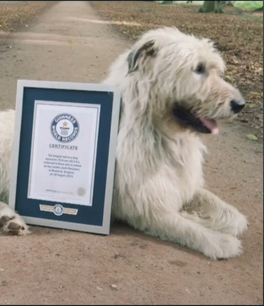 Cachorro com maior rabo do mundo