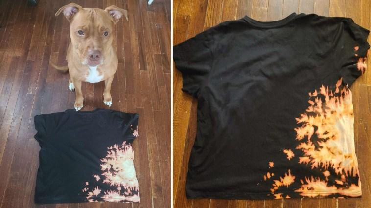 Cachorro cria acidentalmente uma camisetasuper legalpara a dona