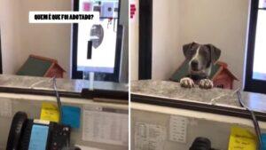 Cachorro de abrigo fica sabendo que foi adotado e reage de forma adorável