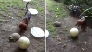 Cachorro e tartaruga jogam bola juntos em vídeo divertido