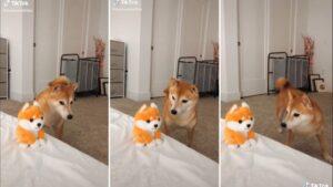 Cachorro fica desconfiado de miniatura de pelúcia dele mesmo que late