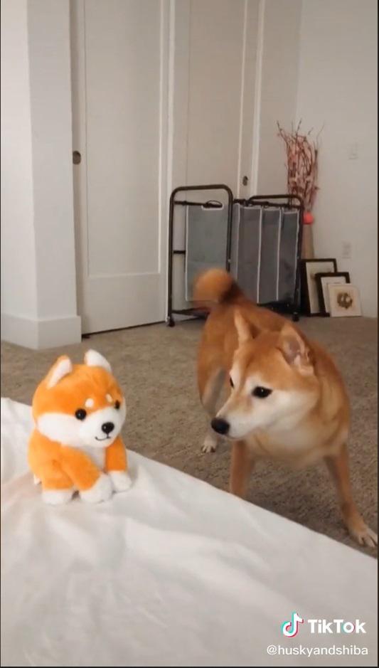 Cachorro fica desconfiado de miniatura dele mesmo