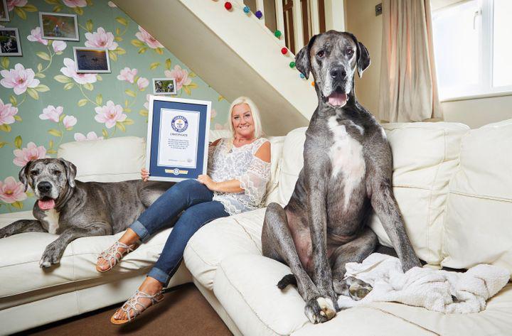 Cachorro mais alto do mundo morreu idade
