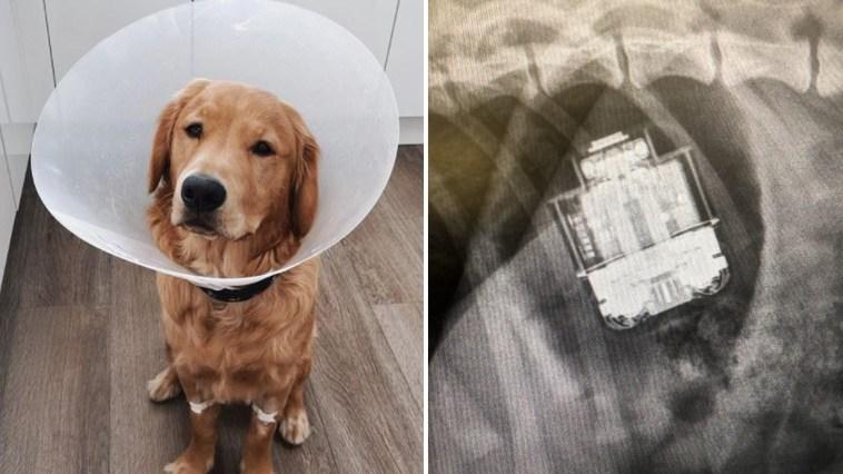 Cachorro passa por cirurgia de emergência após engolirAirPods