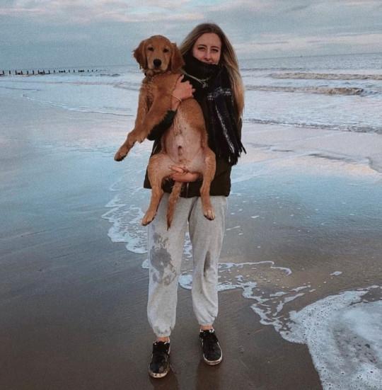 Cachorro passa por cirurgia de emergência airpods