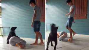 Cachorro passou no teste ao proteger a mãe humana de um agressor