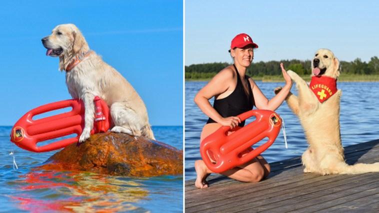 Cachorro recebeu treinamento para se tornar salva-vidas canino