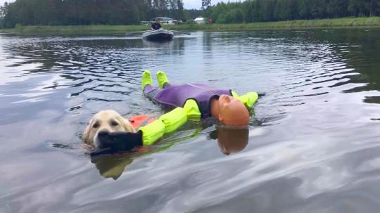 Cachorro recebeu treinamento para se tornar salva-vidas