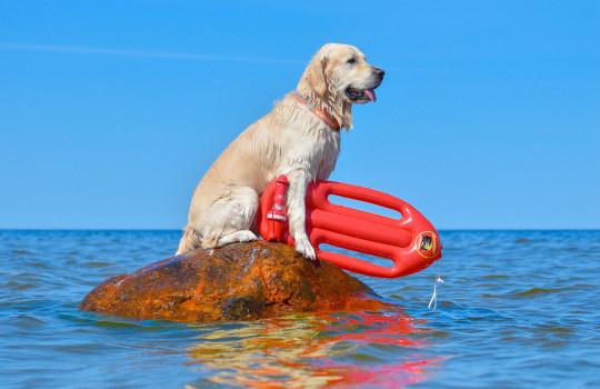 Cachorro recebeu treinamento para