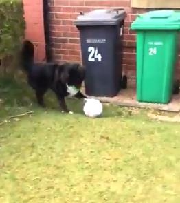 Cachorro só permite que carteiro entregue cartas se jogar bola