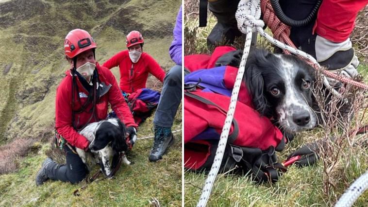 Cachorro sobrevive a queda de mais de 90 metros em cachoeira