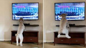 Cachorro torce loucamente ao assistir uma corrida de cavalos