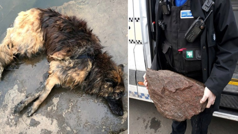 Cadela foi jogada em rio gelado com pedra amarrada ao corpo para se afogar