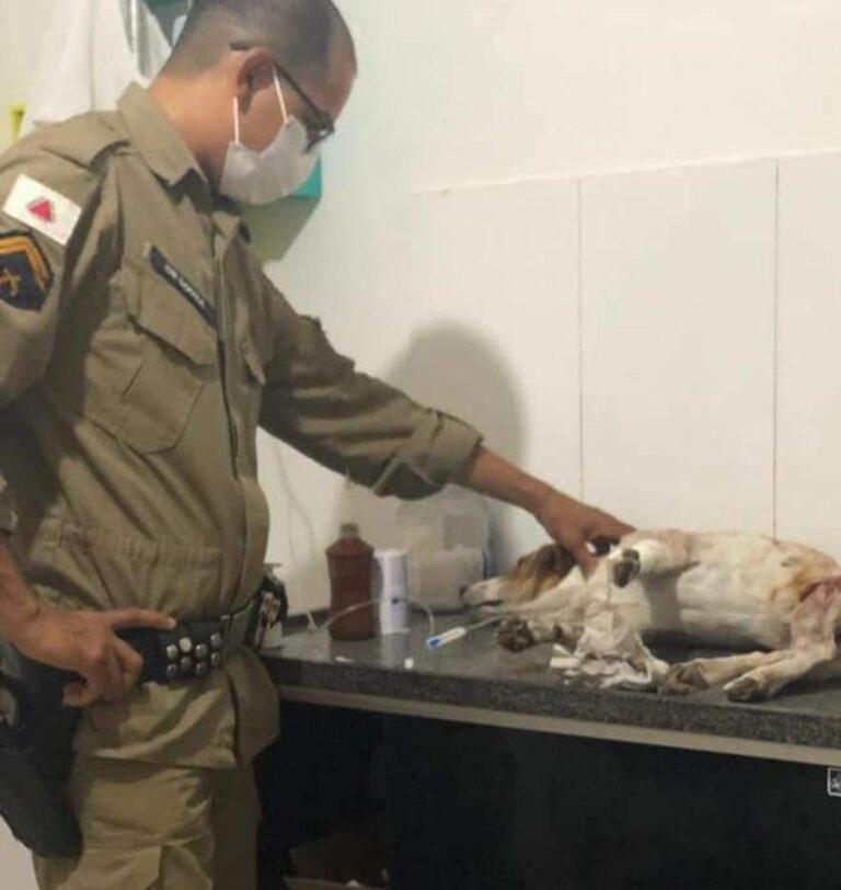 Cãozinho foi esfaqueado ao proteger a dona