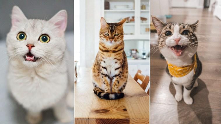Ciência diz que gatos reconhecem voz do dono, mas preferem ignorar