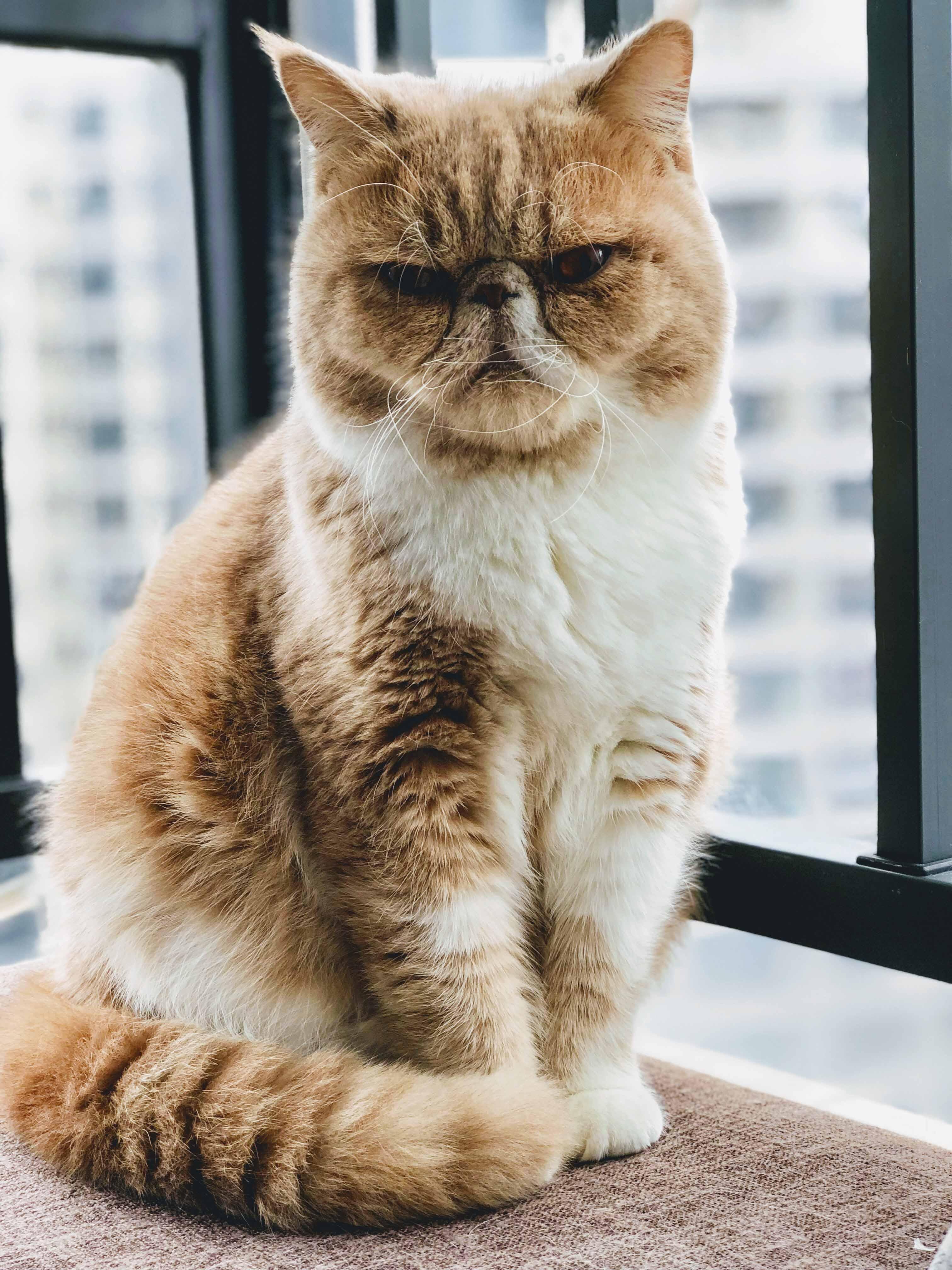 Ciência diz que gatos reconhecem