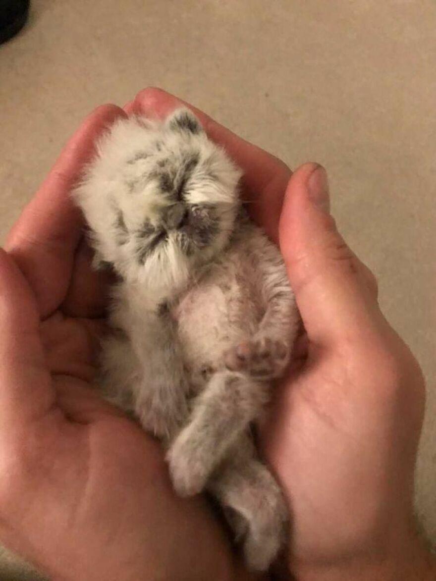 Conheça Vovô um gatinho bebê