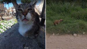 Esses animais foram pegos em situações hilárias pelo Google Street View