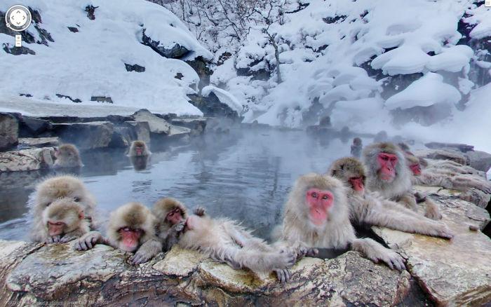 Esses animais foram pegos em situações hilárias macacos