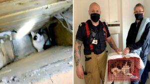Gata de rua ficou presa por três semanas em buraco na parede