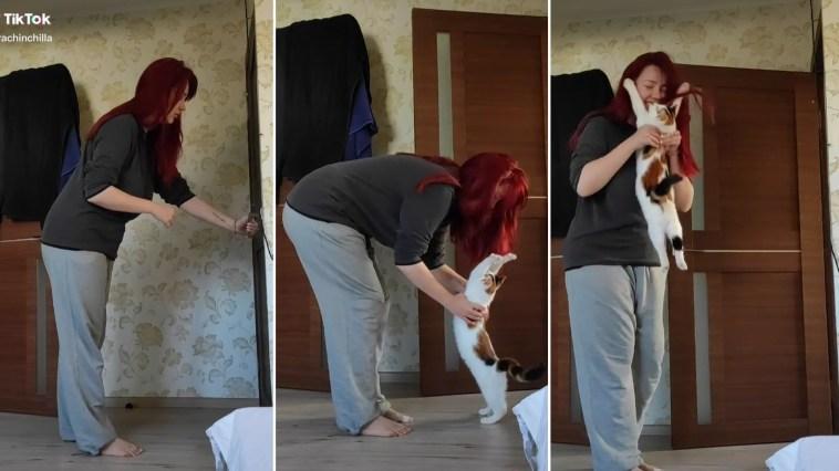 Gatinho bate na porta de manhã e exige abraço de bom dia da dona