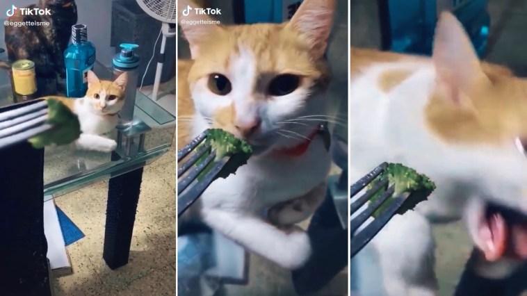Gatinho que odeia vegetais dá mal exemplo às crianças e quase vomita
