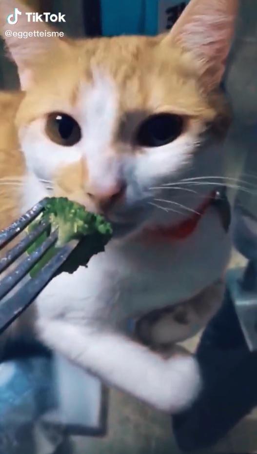 Gatinho que odeia vegetais vídeo