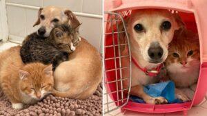 Gatinhos de rua resgatados recebem ajuda de cadela simpática