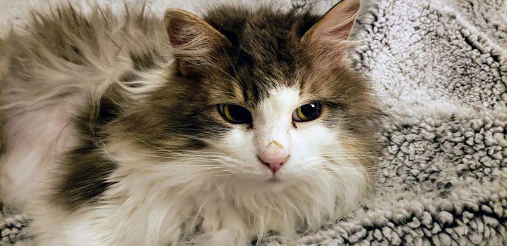 Gato encontrado totalmente congelado recuperação