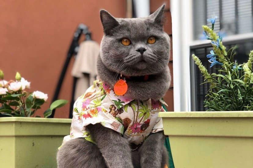 Gato famoso na internet morre durante briga