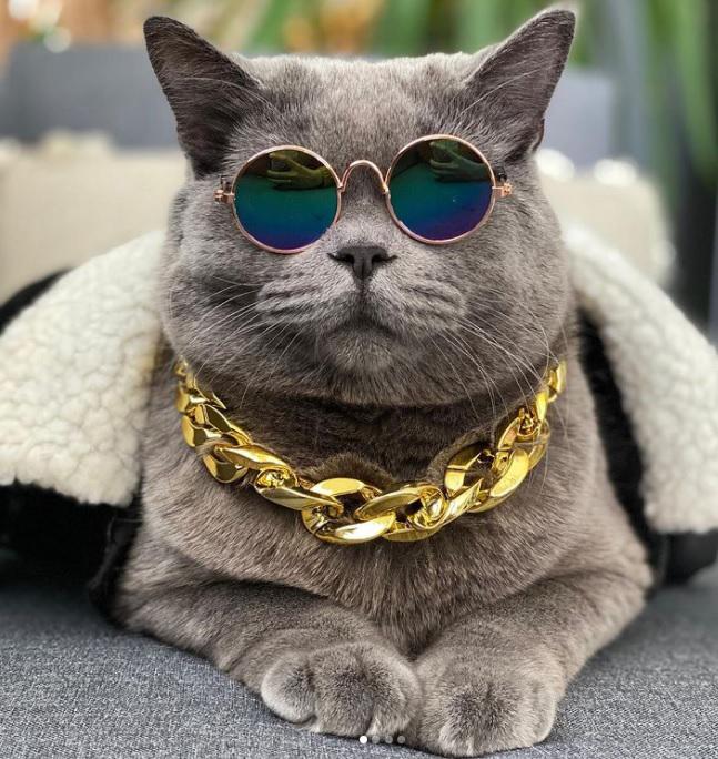 Gato famoso na internet morre