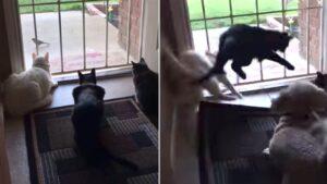 Gatos observavam um pássaro, mas o cachorro estragou tudo