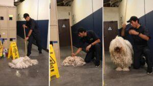 Ilusionista transforma esfregão em cachorrão em vídeo divertido