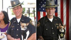 Menor cão policial do mundo e parceiro xerife morrem no mesmo dia