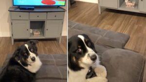 Mulher ameaça mudar de canal e cachorro esconde o controle remoto