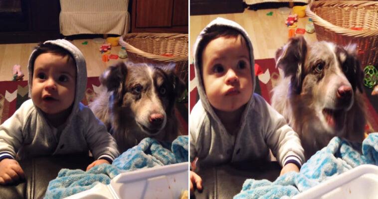 Mulher pede que mamãe cachorro bebê