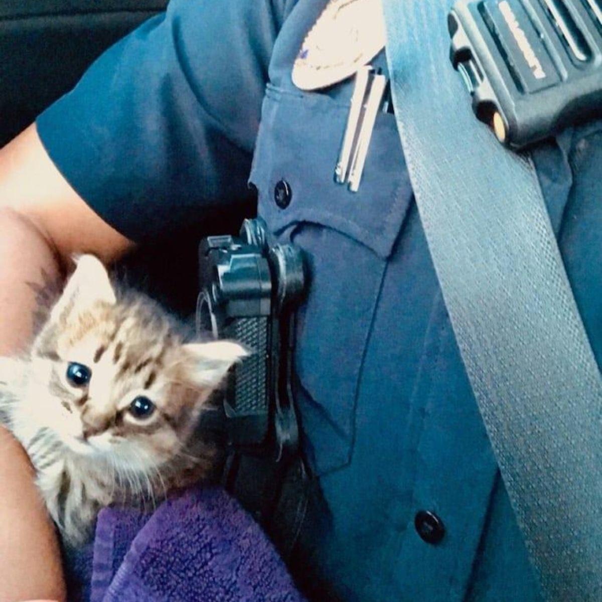 Policiais resgatam uma gatinha e a promovem