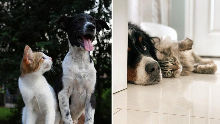 Rússia registra primeira vacina para gatos e cães contra coronavírus