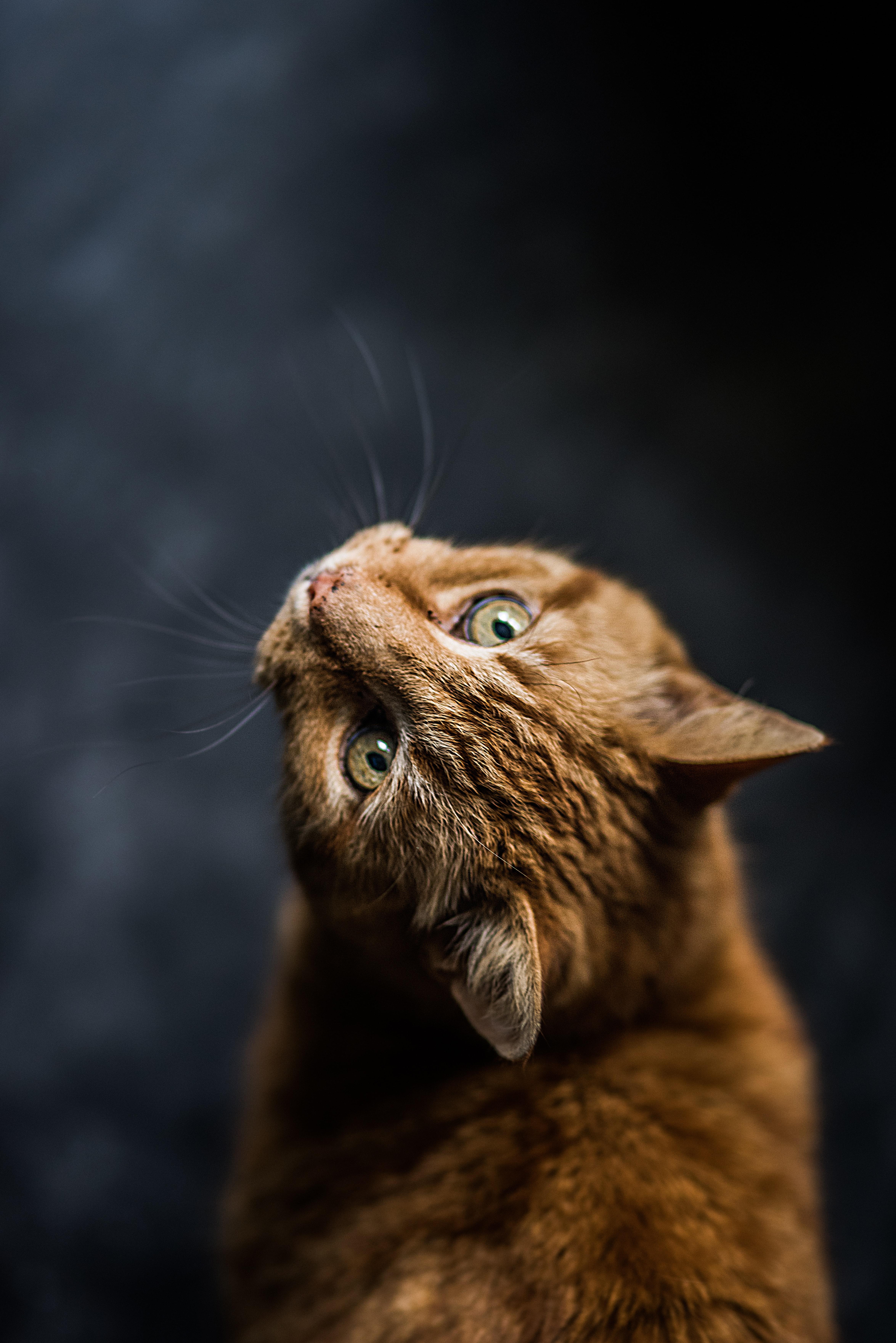 teste de DNA para gatos