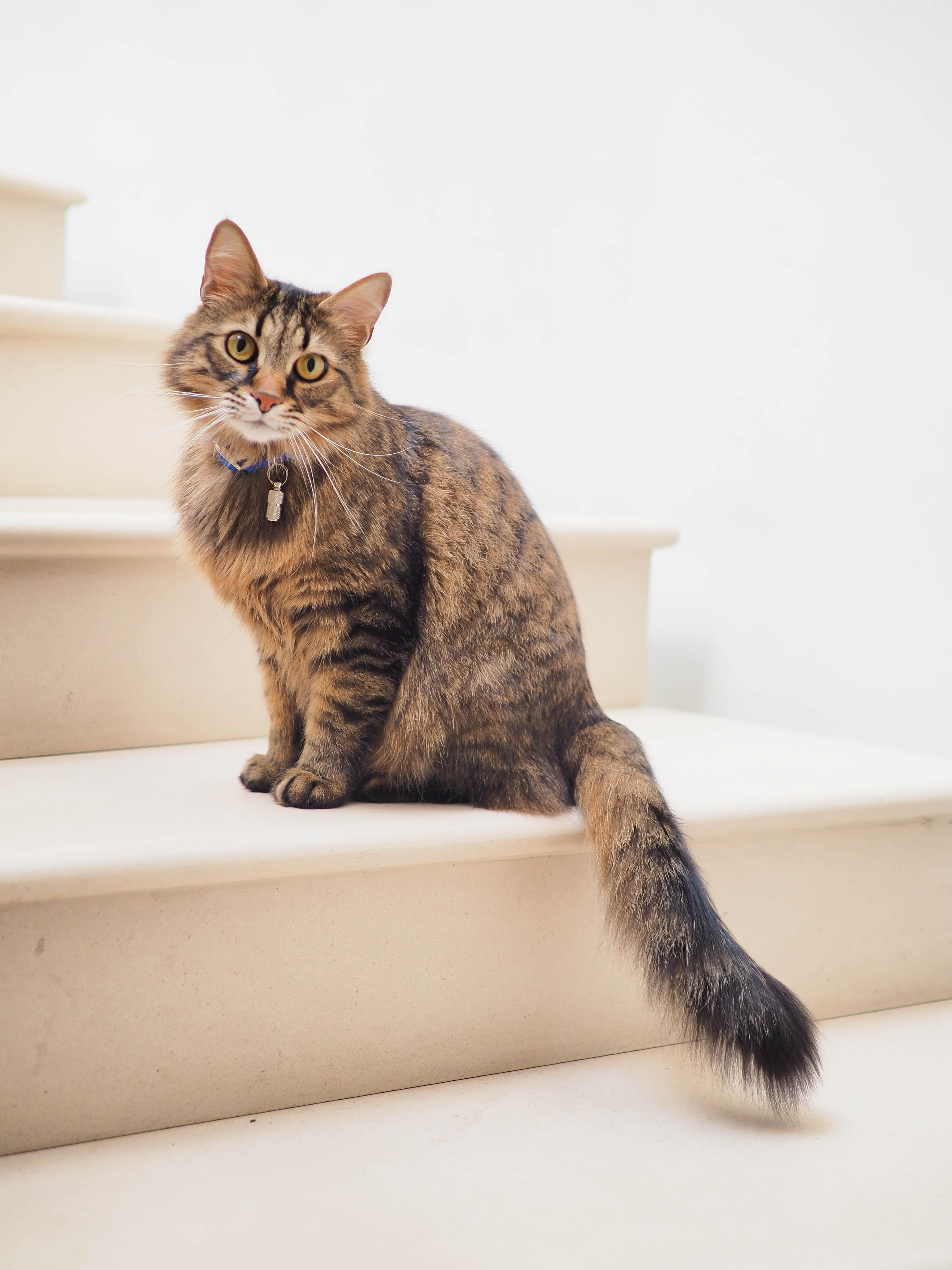 testes de DNA para gatos