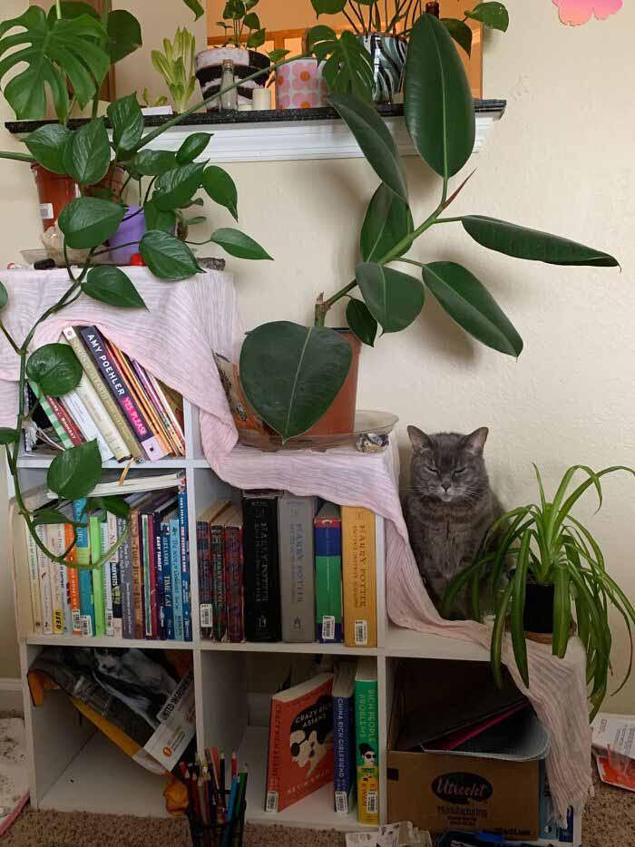 animais selvagens em casa