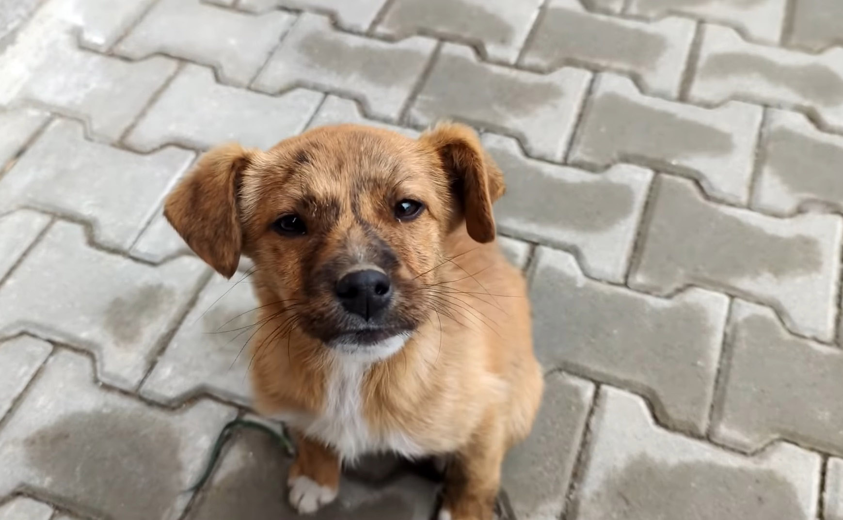 cachorrinho pede para ser adotado