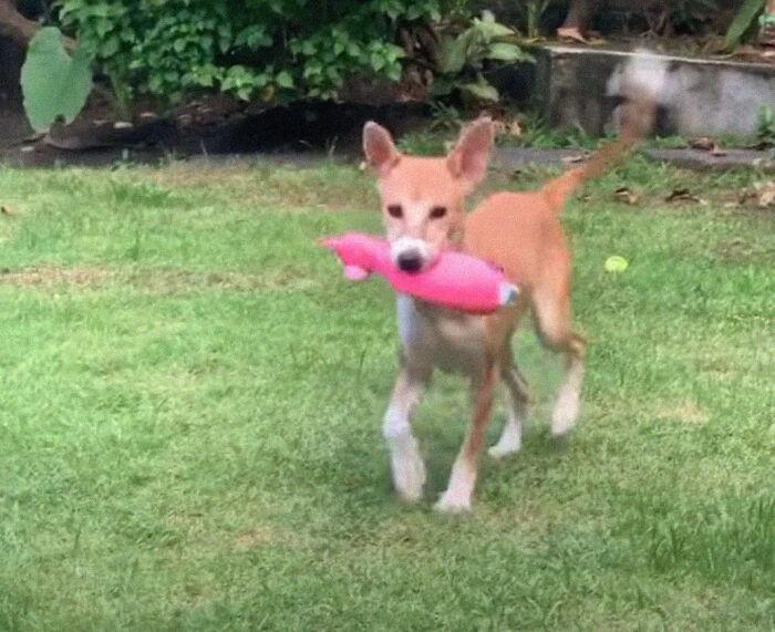 cachorro salvo da crueldade Cadela fugiu de fazenda