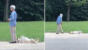 Cachorro se joga no chão para poder ficar no parque mais um pouco