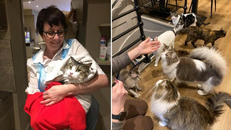 Enfermeira psiquiátrica deixou emprego para criar um café com gatos