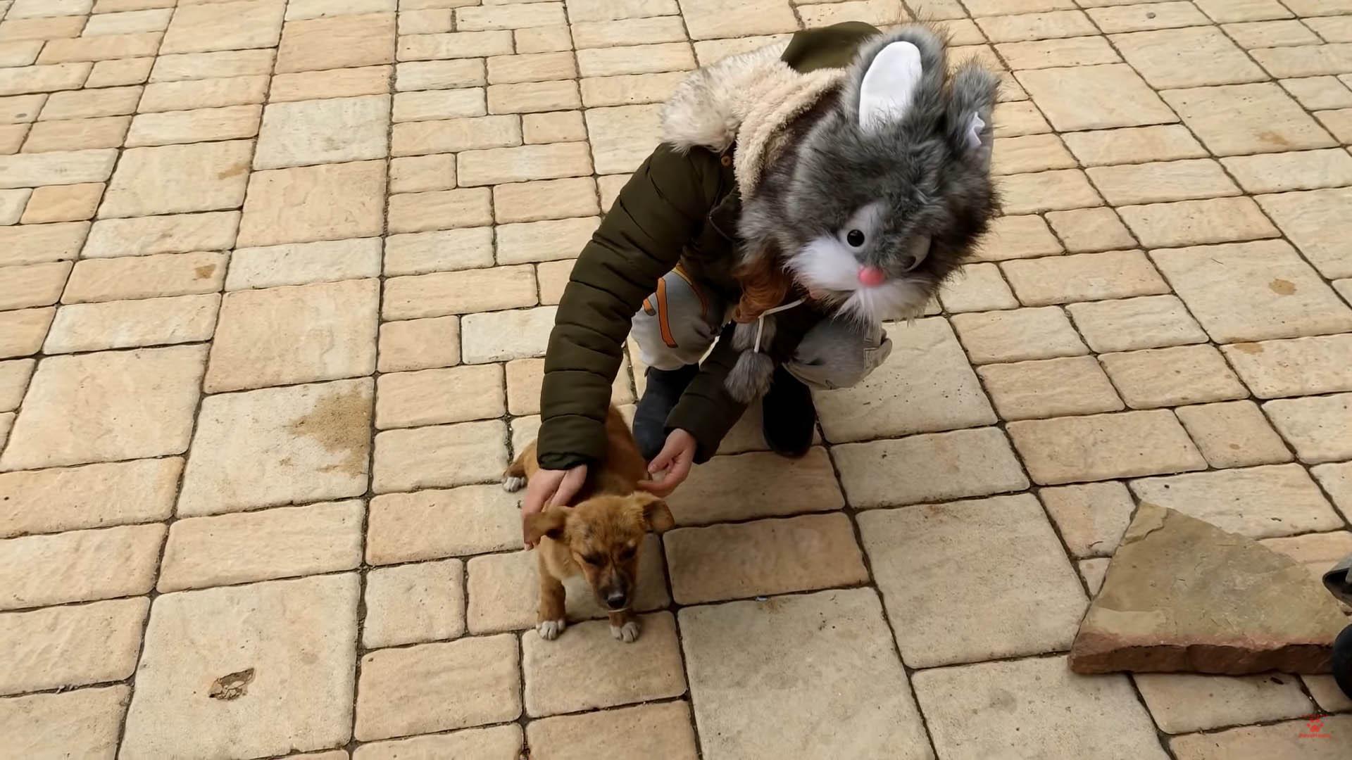 filhote de rua foi adotado