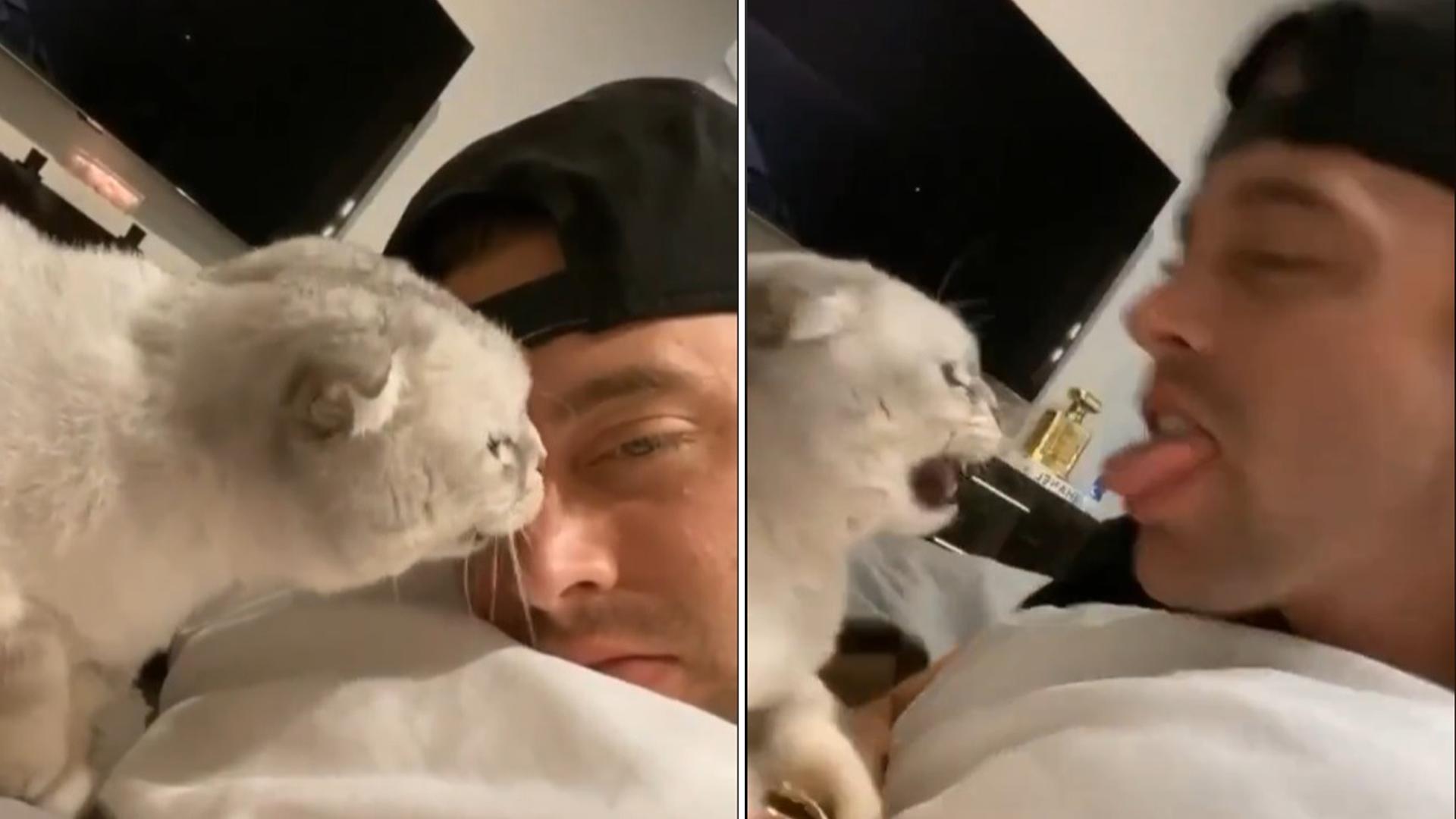 gatinho adora lamber