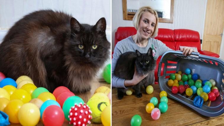 Conheça um gatinho especializado em roubar bolinhas coloridas de crianças